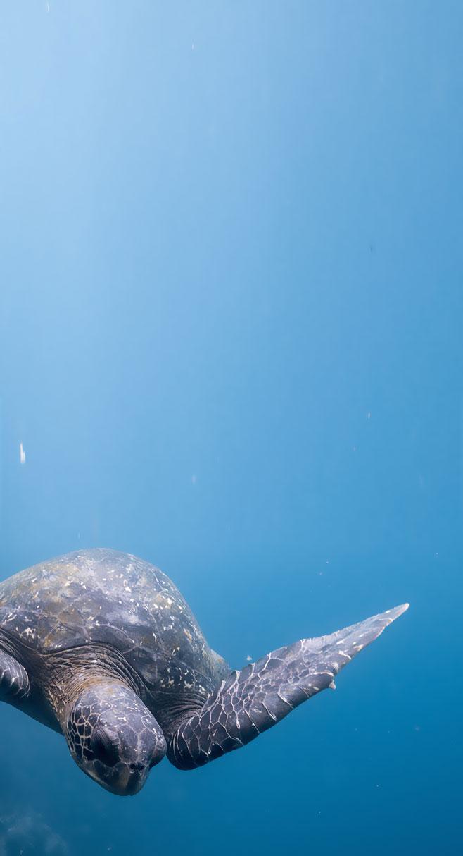 fondo-galapagos2